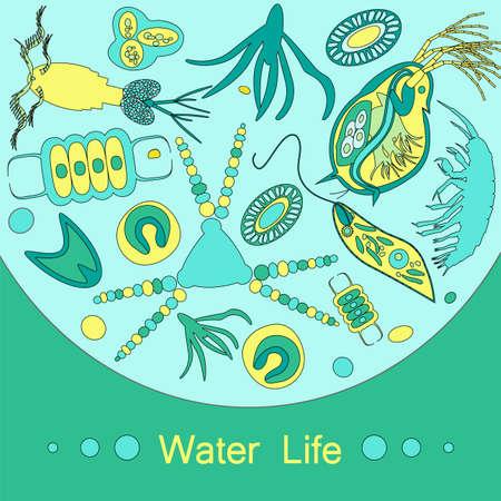 plancton: Fitoplancton y zooplancton. Ilustración del vector con pequeño organismo de plancton en el tema de la naturaleza de la fauna biológica del medio ambiente. Vectores