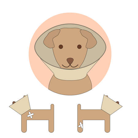 diseased: E-collar on a dog isolated on white background. Pet cone. Vector illustration of elizabethan collar for animal protection in veterinary