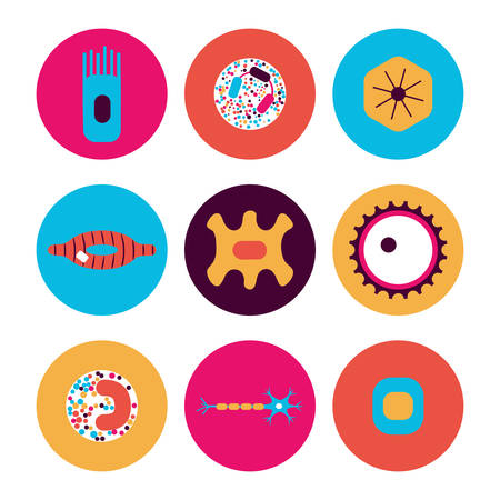 epithelial: Different human cell types icon set. Stock vector illustration of bone, nerve, epithelial, muscle, blood, stem, sperm and oocyte in a circle in bright colors. Medicine and biology collection