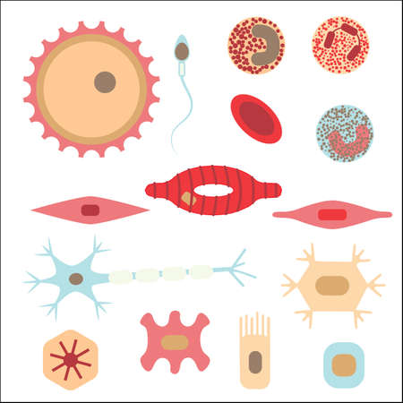 Different human cell types icon set. Stock vector illustration of bone, nerve, epithelial, muscle, blood, stem, sperm and oocyte. Medicine and biology collection