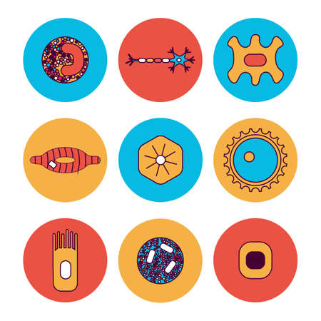 epithelial: Different human cell types icon set. Stock vector illustration of bone, nerve.