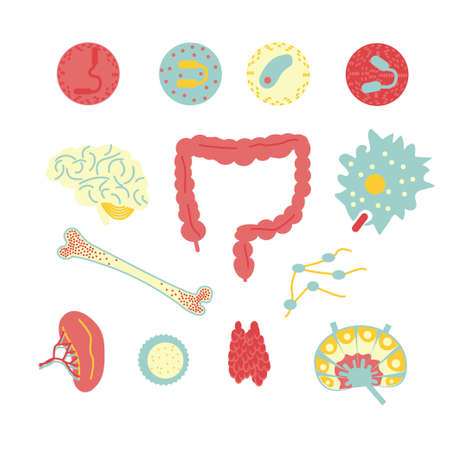 Immune system icon set. Stock vector illustration of human internal organs, body parts and cells in immune response.