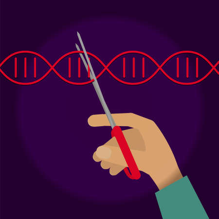 Manual genetic engineering concept. Stock vector illustration of a human hand cutting DNA double helix with scissors.
