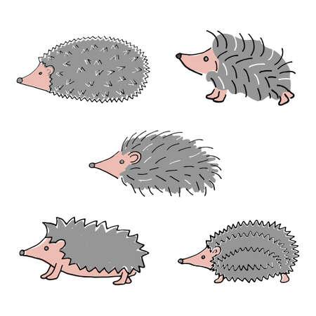 hedgehog hand drawn