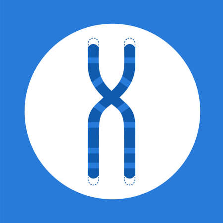 Chromosome structure with telomeres at the ends flat style illustration.