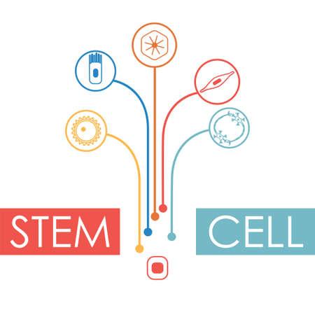 Différents types de cellules humaines se développant à partir d'une cellule souche. Illustration vectorielle stock de nerf, épithélium, muscle, sang, ovocyte. Collection médecine et biologie Banque d'images - 93699632