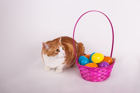 Cute orange and white cat with Easter egg basket
