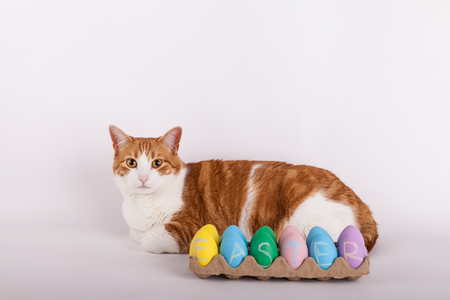Easter kitty cat laying behind carton of pastel colored Easter eggs