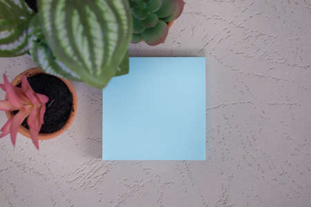 Blank empty square light blue posted sticky note with no words add content with small desk plants flat lay background