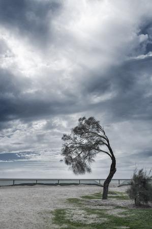 Coastal tree bent in strong wind, Mornington Peninsula, Australia. Stock Photo