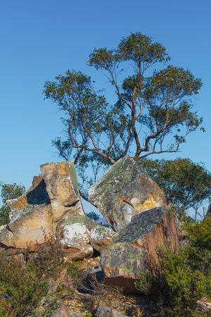 Eucalyptus australien et gros rochers. Parc national des Grampians Banque d'images - 79007984