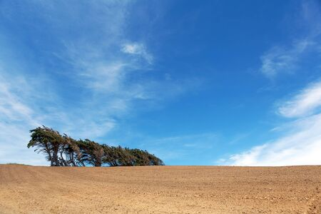 Windsept trees standing on a ploughed field, Southland, South Island, New Zealand. Stock Photo