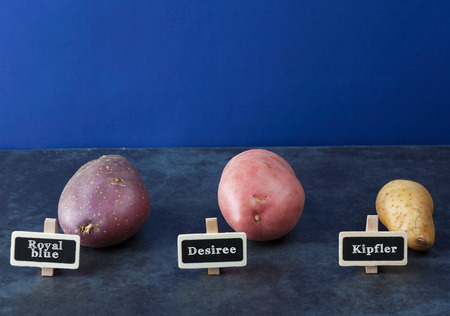 Three kinds of potatoes with blue background and copy space. Stock Photo