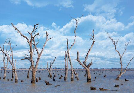 Dry tree barks and stumps at Kow Swamp, Victoria Australia. Stock Photo