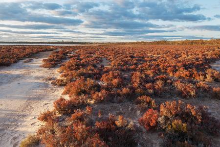 Native Australian desert shrubs landscape at sunset. Murray-Sunset national park, Australia.