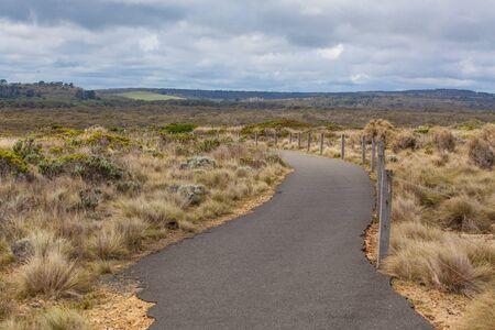 Winding pathway among coastal vegetation on Great Ocean Road, Australia