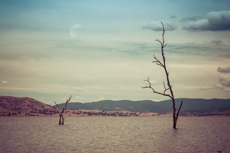 湖の水から不毛の木。終末論的な外国の風景