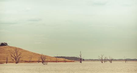 水から不毛の木。ヒューム湖、ビクトリア、オーストラリア