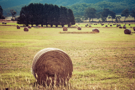 Round hay bale in a field closeup with more hay bales and trees in the background landscape. Imagens