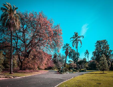 Empty walkway in autumn. Royal Botanic Gardens, Melbourne, Australia