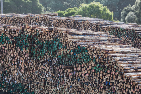 Huge stack of tree tunks in a lumber yard