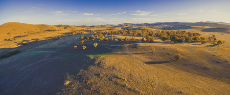 Aerial panorama of scenic yellow hills and trees at sunset with long shadows 写真素材