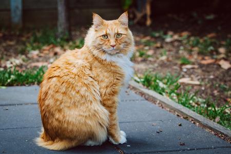 Αποτέλεσμα εικόνας για cat on the pavement