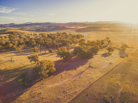 Aerial view of pastures and trees at sunset with long shadows and sun flare