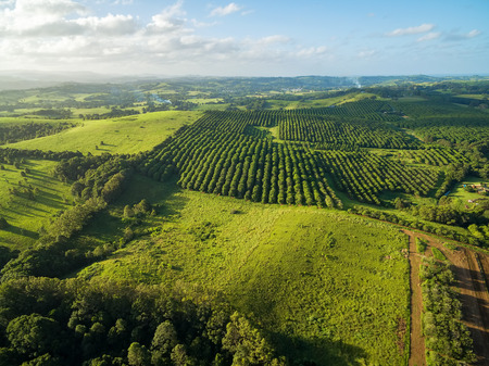 Aerial view of macadamia farm in Australian countryside
