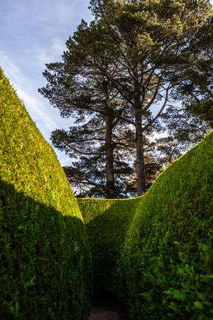 Tall green maze and even taller trees Banco de Imagens