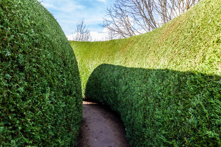 Closeup of a green maze section on bright sunny day