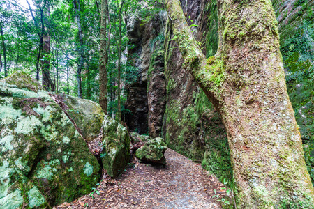 Moss growing on trees and rocks in Springbrook National Park, Queensland, Australia 写真素材