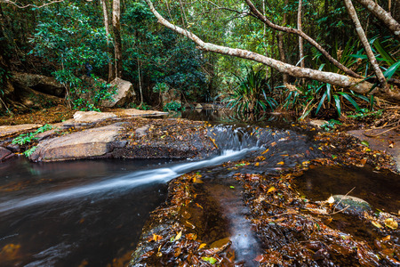 Beautiful bubbling creek in a rainforest Stock Photo
