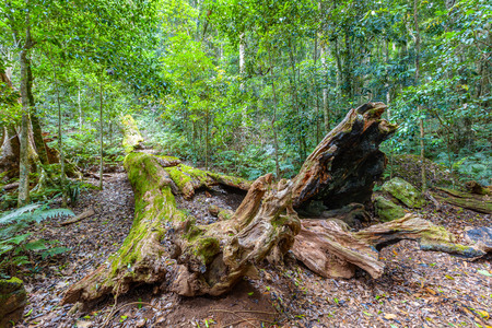 Fallen tree covered with moss in a beautiful lush wild rainforest Stock Photo