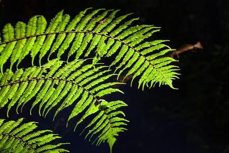 Beautiful fern leafs on black background