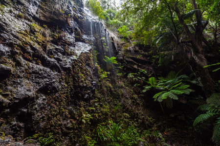Water flowing from high rocks and ferns in temperate rainforest of Springbrook National Park, Queensland, Australia