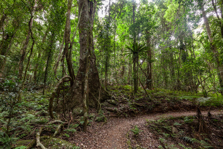 Footpath in temperate rainforest in Queensland, Australia Stock Photo
