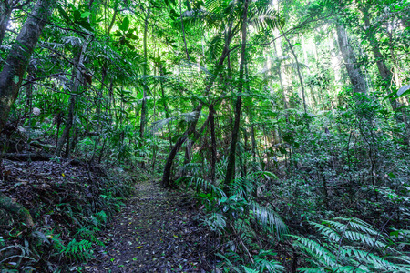 Walking trail in a cool eucalypt forest of Springbrook National Park, Queensland, Australia