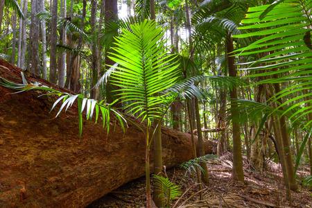 Ferns growing near fallen tree in a rainforest Stock fotó