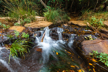 Small waterfall in a rainforest Stock Photo