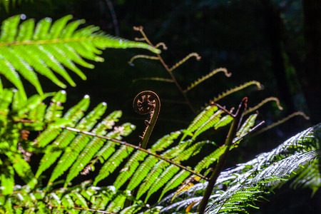 Young fern closeup on blurred background
