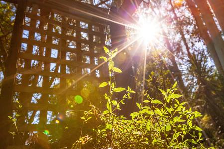 Sonnenlicht mit Lens Flare, das auf grünem Sprössling scheint - Konzept der sauberen Energie und Photosynthese