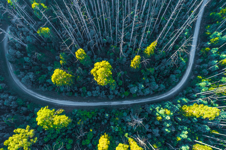 Road bend in eucalyptus forest in Australia - aerial view Imagens