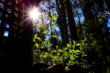 Sonne scheint hell mit Flare auf grünem Sprössling - Nachhaltigkeitskonzept