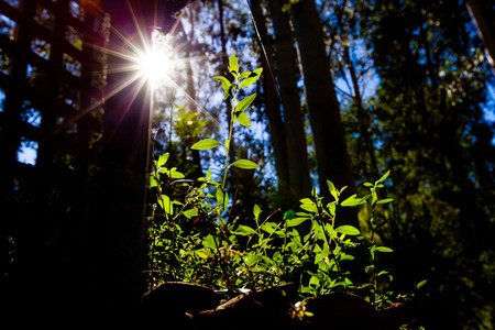 Sun shining brightly with flare on green sprout - sustainability concept