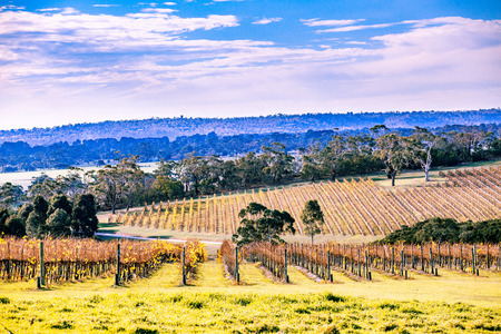 Winery in autumn on Mornington Peninsula, Victoria, Australia