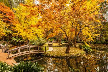 Malowniczy staw z drewnianymi mostkami jesienią w Australii