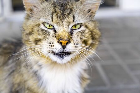 Street cat squinting seriously into the camera