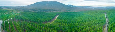 Wide aerial panoramic landscape of pine trees forest and hills in Melbourne, Australia