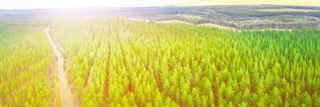 Bright sunset over pine tree forest in Melbourne, Australia - aerial panorama Stockfoto